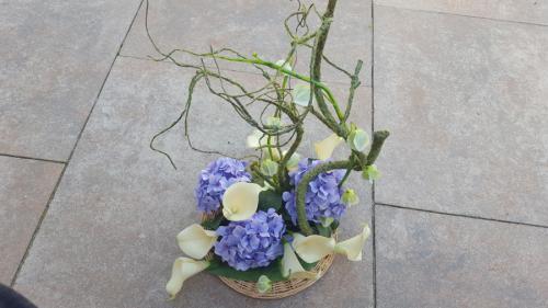 Rietmand met blauwe hortensia